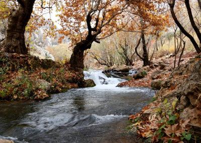 creek running under trees