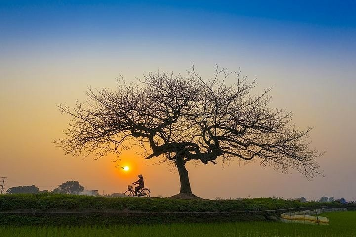 silhouette of a tree in a landscape with a setting sun