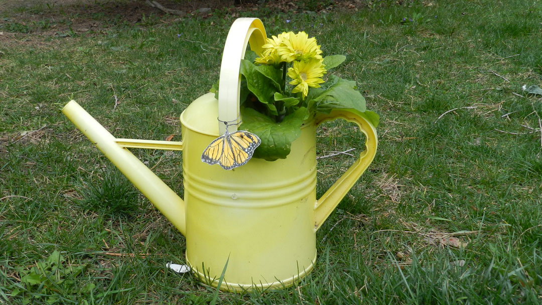 yellow watering can with yellow flowers planted in it and a monarch butterfly