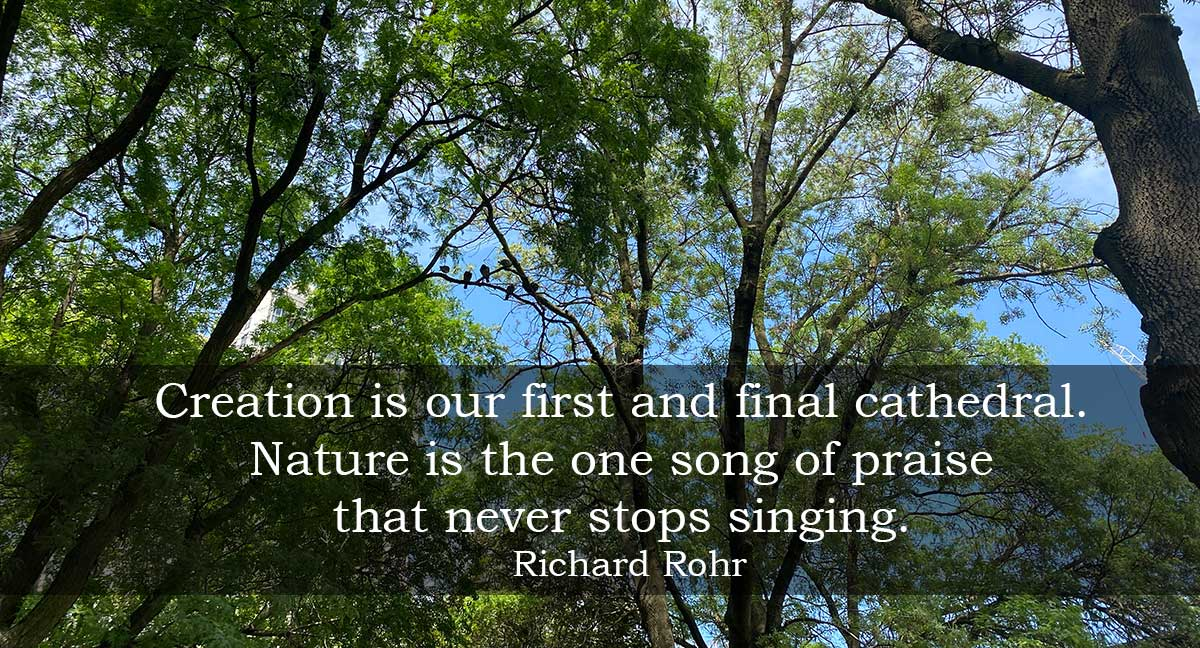 tree tops with quote: Creation is our first and final cathedral. Nature is the one song of praise that never stops singing. Richard Rohr.