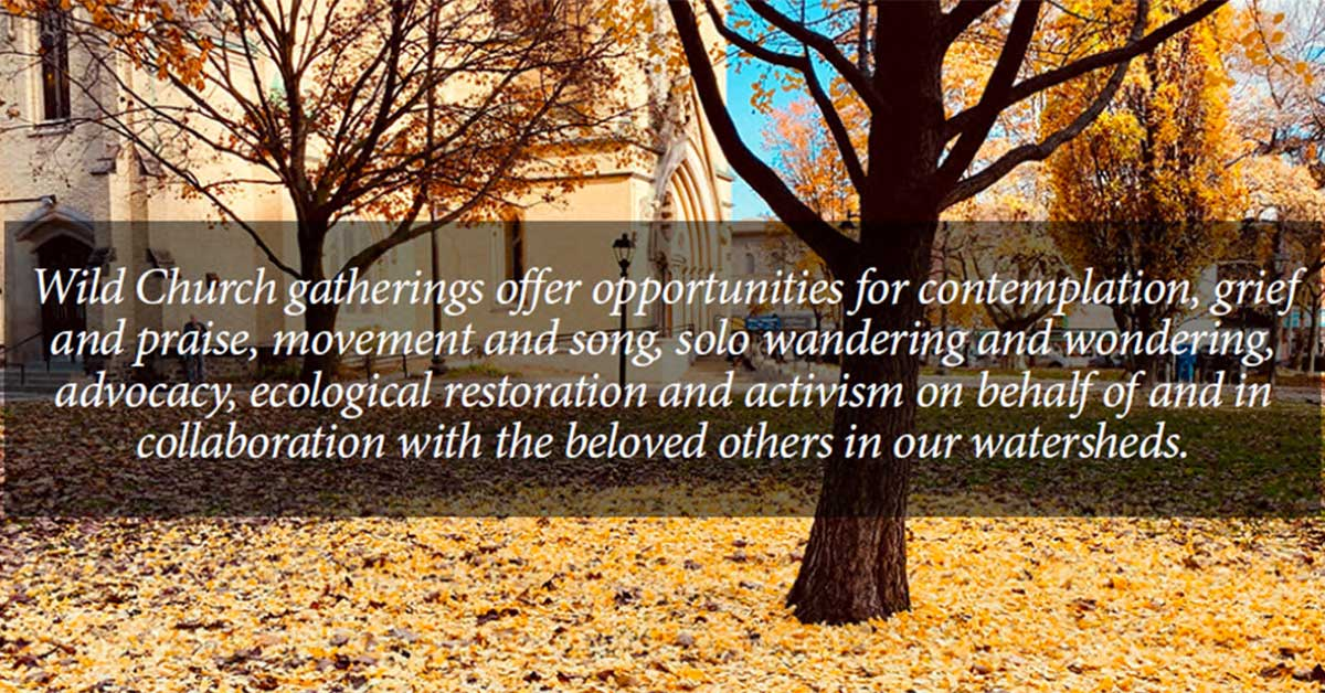 trees behind a quote: Wild church gatherings offer opportunities for contemplation, grief and praise, movement and song, solo wandering and wondering, advocacy, ecological restoration and activism on behalf of and in collaboration with the beloved others in our watersheds.