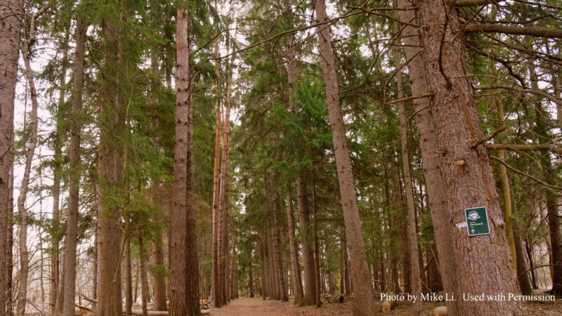 a forest of tall trees