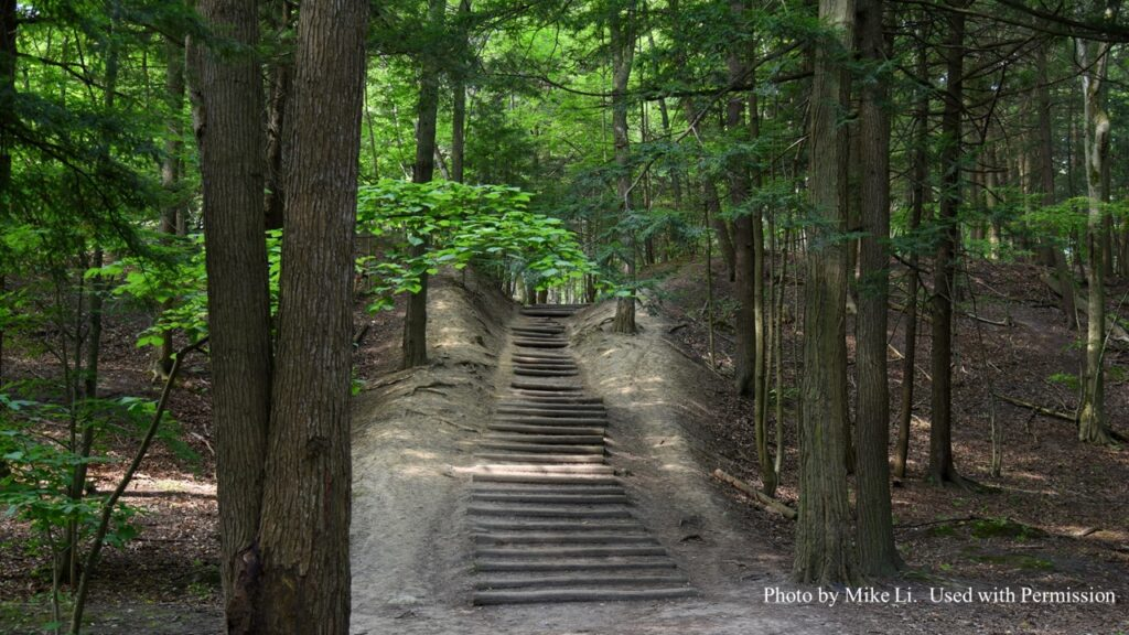 Stone staircase in the woods